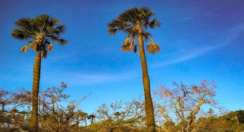 Objek Wisata Pantai Bama