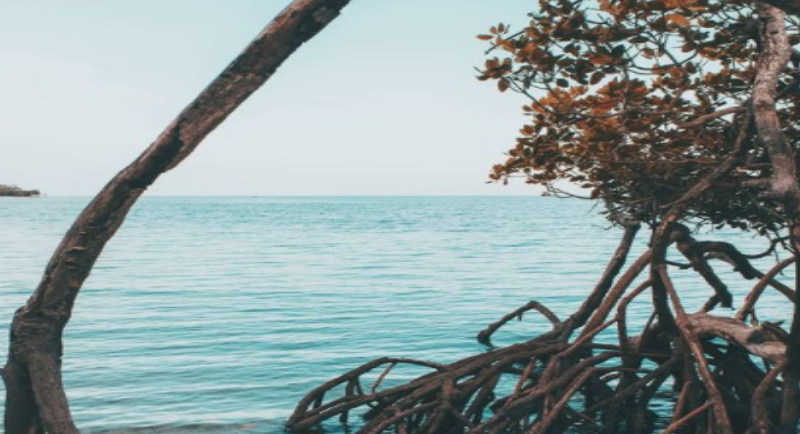 Rute Menuju Pantai Bama
