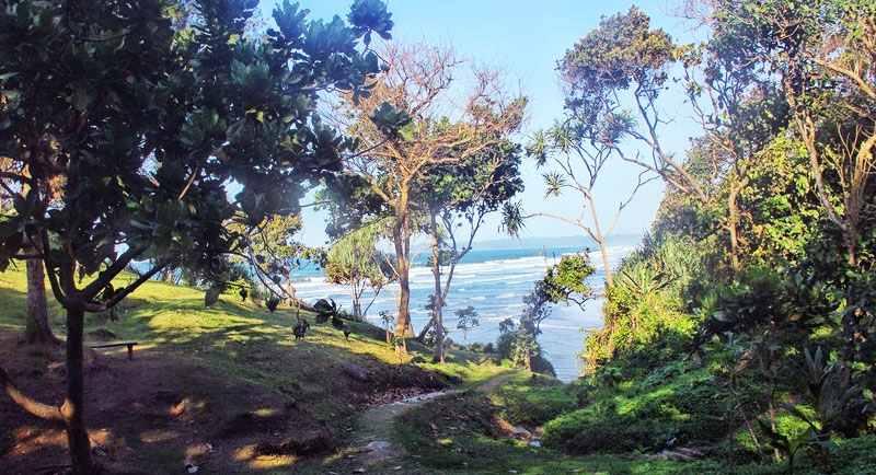 Hutan Dekat Pantai Karang Nini
