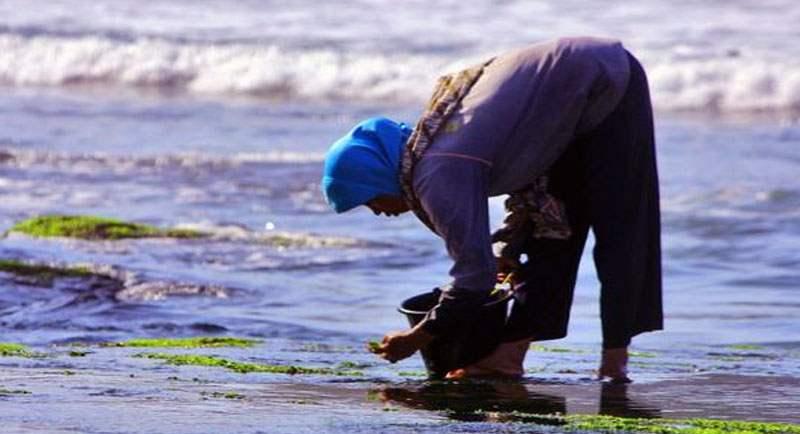 Panen Rumput Laut Di Pantai Nguyahan