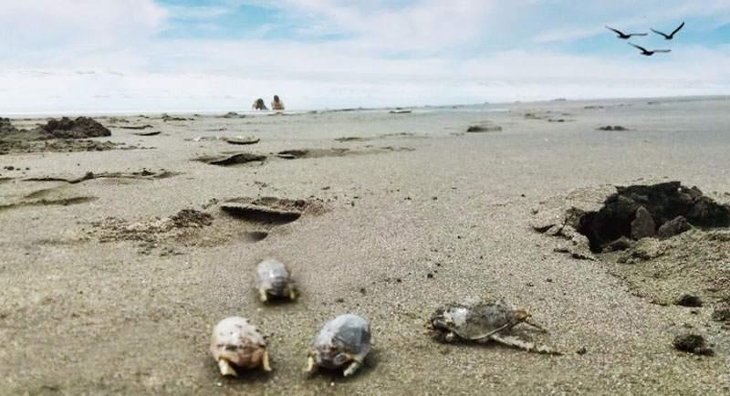 Berburu Undur Undur Di Pantai Jetis Purworejo