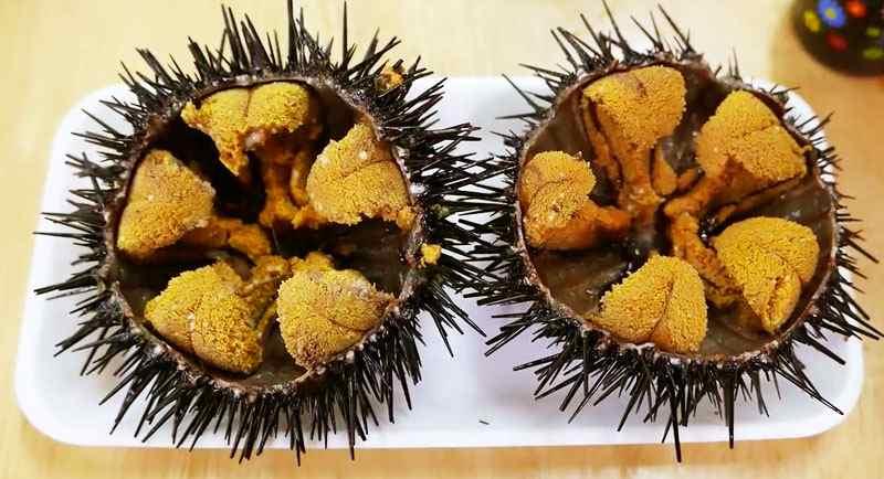 Makan Landak Laut Di Pantai Ngobaran