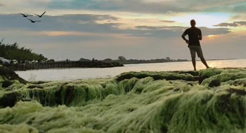 Wisata Pantai Jatisari Rembang