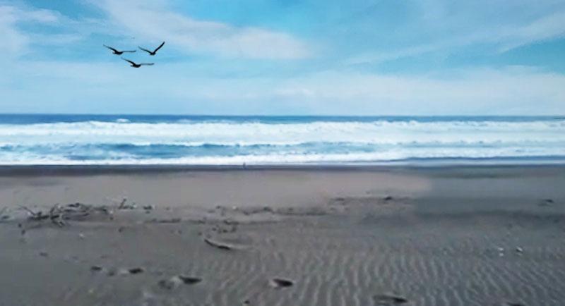 Wisata Pantai Keburuhan Purworejo