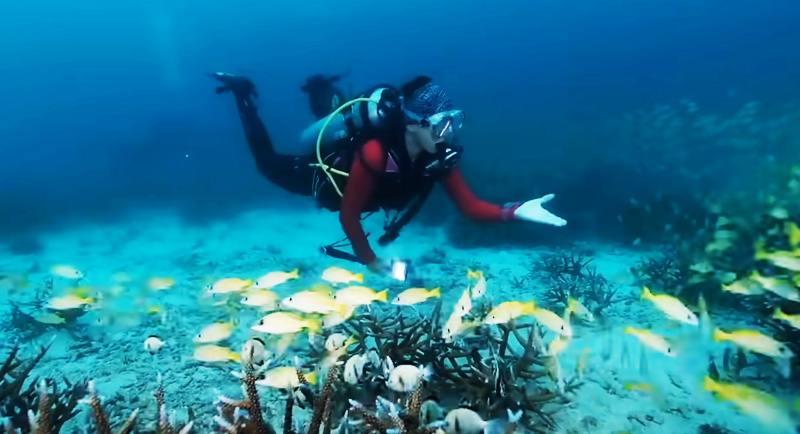 Diving Di Pantai Anoi Itam