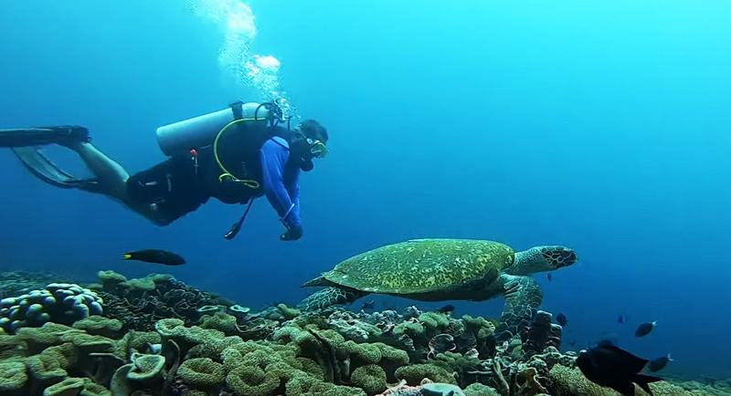 Diving Di Pantai Jikomalamo