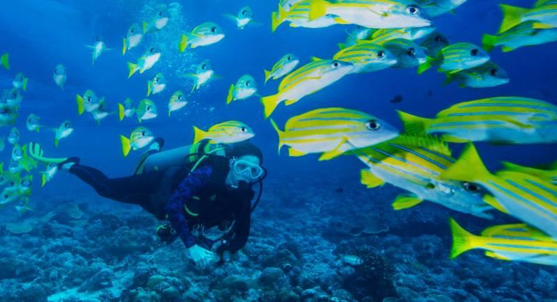 Diving Di Pantai Sumur Tiga