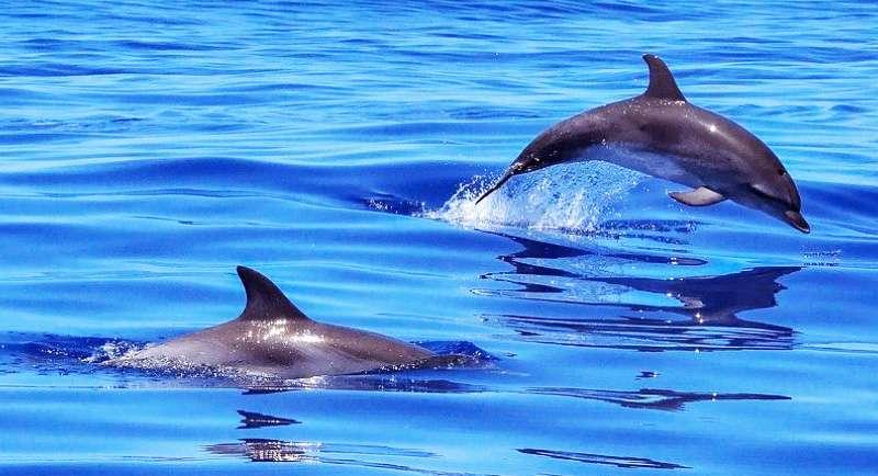 Lumba Lumba Di Pantai Pulau Cemara Karimunjawa