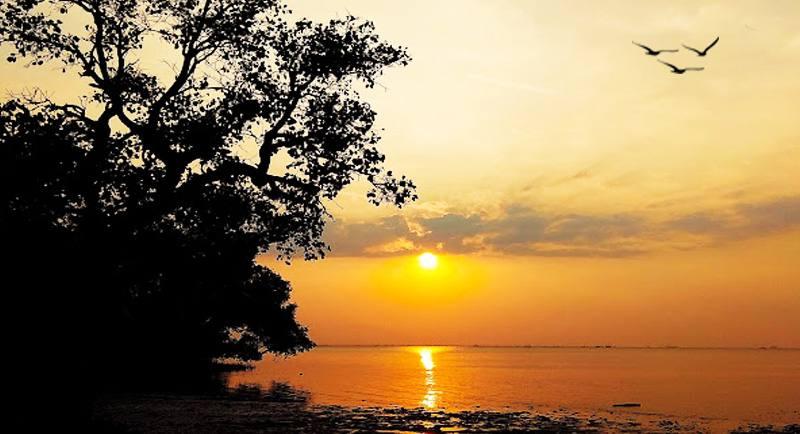 Pantai Mangrove Tuban Jatim