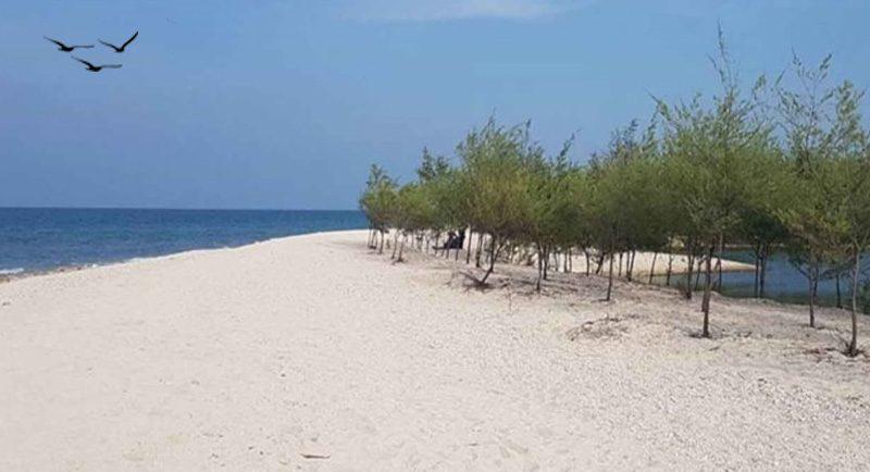 Pantai Mangrove Tuban Jawa Timur